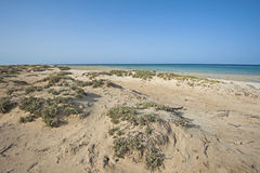 Bushes on sand dunes by tropical ocean Stock Images