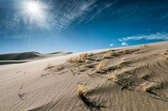 Bushes, sand and sun in the Great Sand Dunes National Park Royalty Free Stock Photo