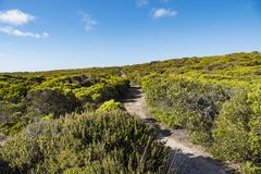Green shrubland, path through green shrubland, Kangaroo Island, Australia Royalty Free Stock Photos