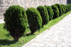 Bushes on a sidewalk of a city Stock Photography