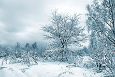 Bushes in snow Royalty Free Stock Photos
