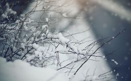 Bushes in snow in cloudy snow weather. Royalty Free Stock Images