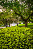 Bushes and trees at the Capitol Complex in Harrisburg, Pennsylva Stock Image