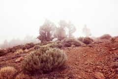 Bushes and trees on a foggy morning Royalty Free Stock Image