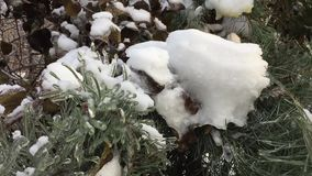 The bushes and trees after icy rain. Trees and bushes covered with ice crust stock footage