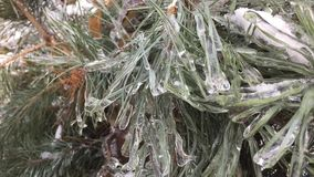 The bushes and trees after icy rain. Trees and bushes covered with ice crust stock video footage