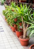 Bushes and trees in plastic pots for flowers. On the street royalty free stock images