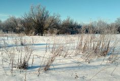 Bushes and trees under the snow. Sunny frosty day. Snow, trees, high dry grass, fence, house, outbuildings. Bare branches stick out their fingers in the blue Royalty Free Stock Photography