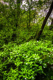 Bushes and trees at Wildwood Park, in Harrisburg, Pennsylvania. Stock Photography