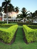 Bushes on tropical resort Stock Photography