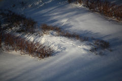 The bushes under the snow Royalty Free Stock Photography