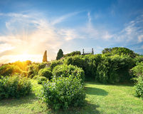 Bushes in Vorontsov garden. Green bushes in Vorontsov garden in sunny day royalty free stock image