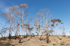 bushfire故障 库存图片