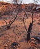 Bushfire żniwo; Australia ` s rewolucjonistki Centre zdjęcie stock