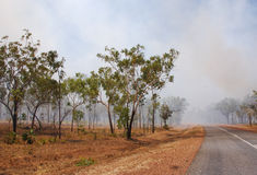 bushfire 库存照片