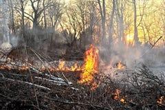 bushfire 免版税库存图片