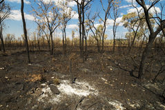 After Bushfire Stock Images
