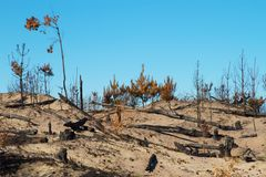 Bushfire Stock Photos