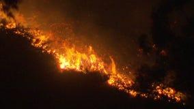 Bushfire stock video