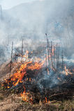 bushfire 免版税库存照片
