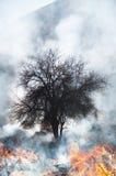 bushfire 免版税图库摄影