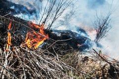 bushfire 库存图片