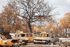 Bushfire Aftermath Stock Images
