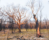 Bushfire aftermath Stock Photo