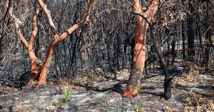 Bushfire aftermath Royalty Free Stock Images