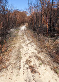 Bushfire aftermath Royalty Free Stock Image