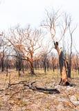 Bushfire aftermath Royalty Free Stock Image