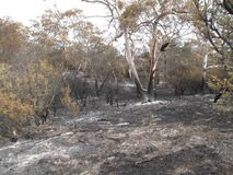 Bushfire aftermath stock photos