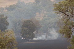 Bushfire Aftermath Royalty Free Stock Photos