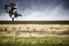 Bushfire Alert Stock Photography