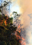 Bushfire in Australian bush Stock Images