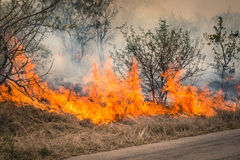 Bushfire burning at Kruger Park in South Africa Stock Photo