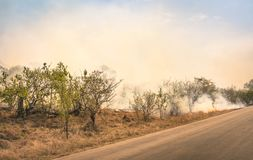 Bushfire burning at nature park in South Africa - Disaster in bush forest. With fire spreading in dry woods Royalty Free Stock Image