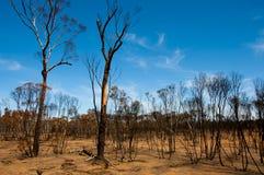 Bushfire Burnt drzewa zdjęcia royalty free