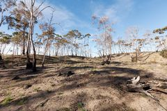 Bushfire Damage Stock Image