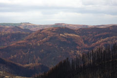 Bushfire Devastation. In South Gippsland, Victoria, Australia, after 2009 Black Saturday bushfires.  Looking west from near Mount Tassie Stock Image