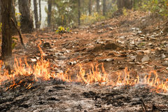 Bushfire in forest ,Thailand Royalty Free Stock Images