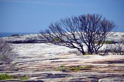 Bushfire gebrannter Baum auf Sandsteinhochebene Australien stockbilder
