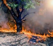 Bushfire płonąca czerwień przy nocą i pomarańcze Zdjęcia Royalty Free