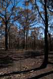 After the Bushfire Stock Image