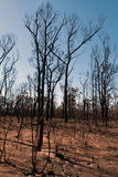 After the Bushfire Royalty Free Stock Images