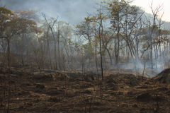 Bushfire - Stock Image Stock Photo