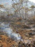 Bushfire - Stock Image Stock Image