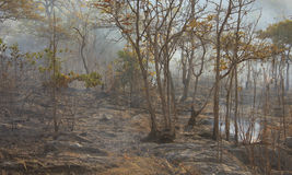 Bushfire - Stock Image Royalty Free Stock Images