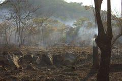 Bushfire - Stock Image Stock Photography