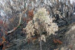 Bushfire szkoda, Australia zdjęcia stock